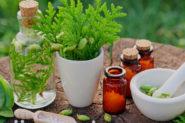 Les plantes : de véritables alliées pour votre santé