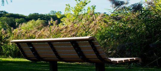 Éradication du roseau commun et revégétalisation au parc du Ruisseau